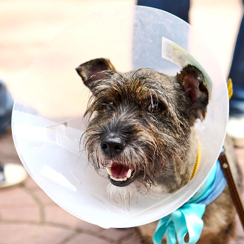 Dog Dexexing Balgownie Vet Hospital