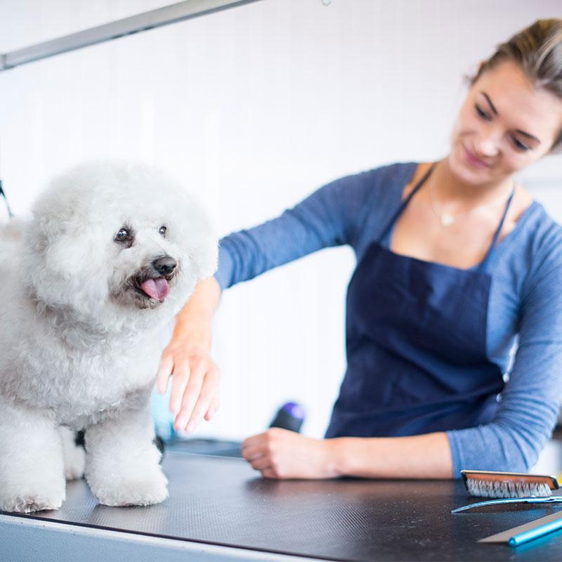 Grooming Balgownie Veterinary Hospital